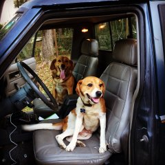 joe-and-charlie-chillin-in-the-jeep_23414853392_o.jpg