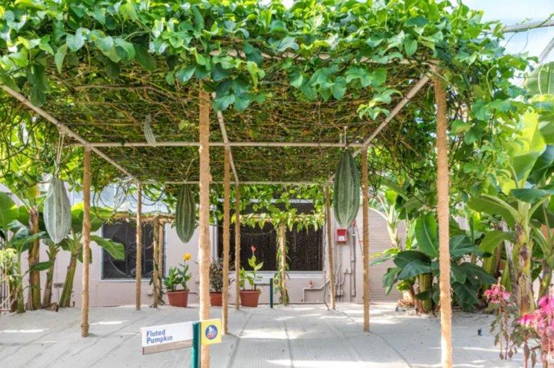 hanging garden.jpg